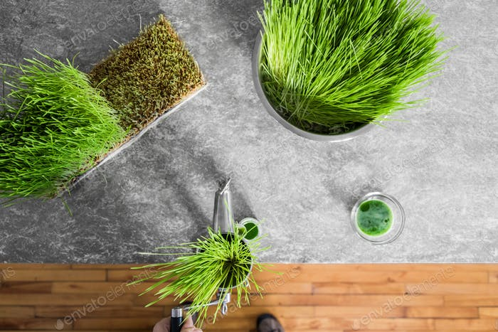 Top View of Wheatgrass Extraction in Action on the Kitchen Count
