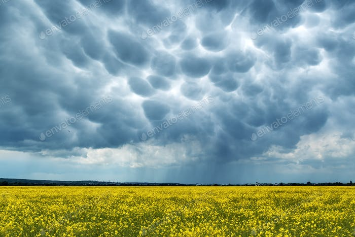 Gelbes Vergewaltigungsfeld auf stürmischem Himmel Hintergrund