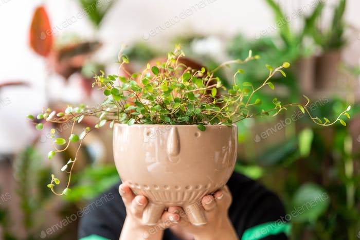 Florist woman holds a plant in a pot.