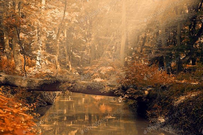 CreekAutumn national park