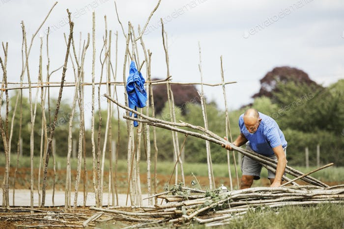 A man making a frame of pea sticks for growing vegetables in an organic vegetable plot.