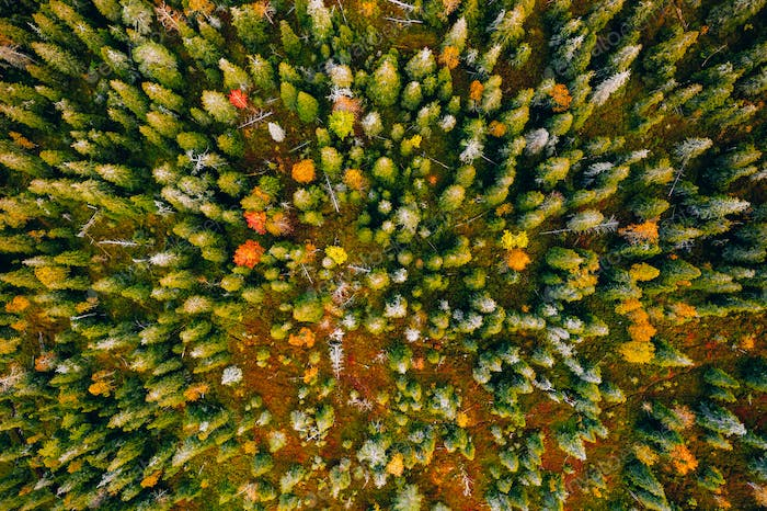 Aerial view of colored forest in autumn. Beautiful autumn forest with red, orange and yellow trees.