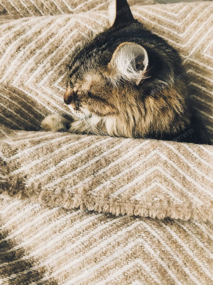 Cute tabby cat sleeping on bed, covered with cozy blanket