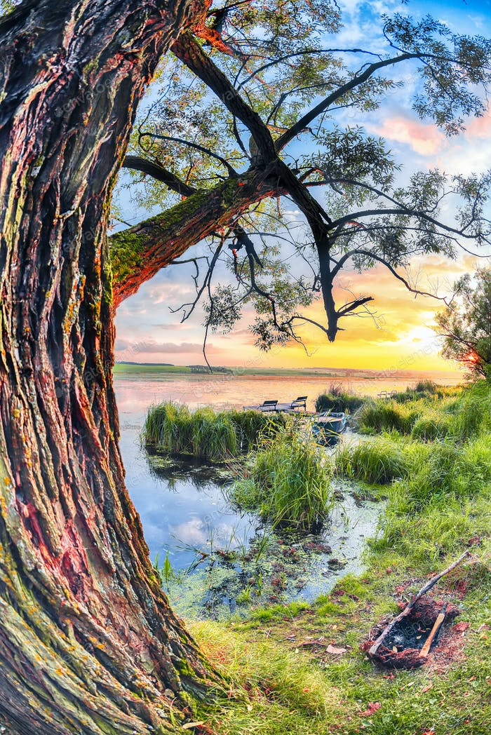 Colorful and vibrant landscape of lake shore with reeds.