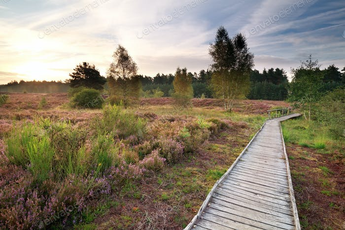 wooden path through heather meadows at sunrise