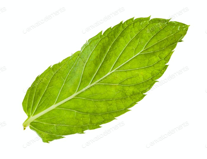 green leaf of fresh mint isolated on white