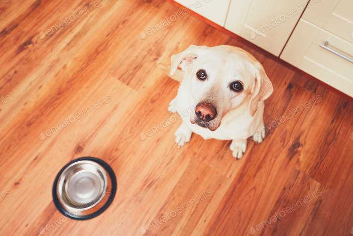 Hungry dog waiting for feeding
