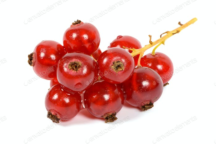 Bunch of red currants on white background