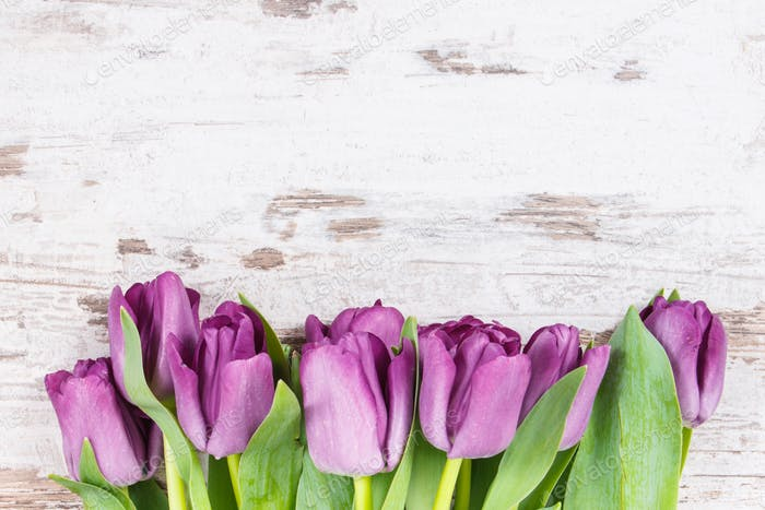 Bouquet of purple tulips for different occasions, copy space for text on white rustic boards