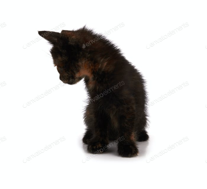 Kätzchen sitzen isoliert