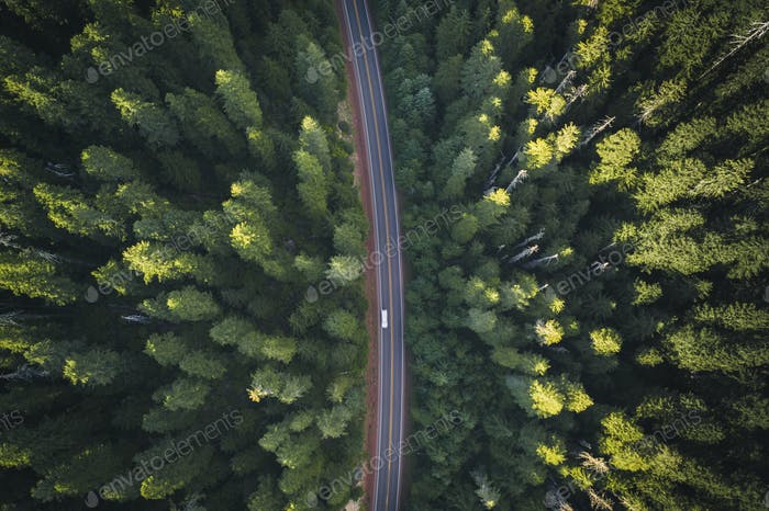 Aerial view of a road through the woods