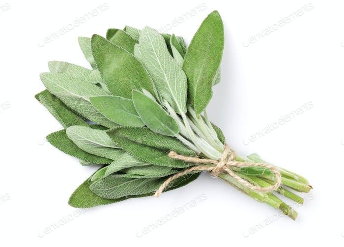 Fresh garden sage herb