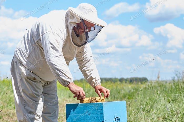 Senior Beekeeper Checking Hive Box