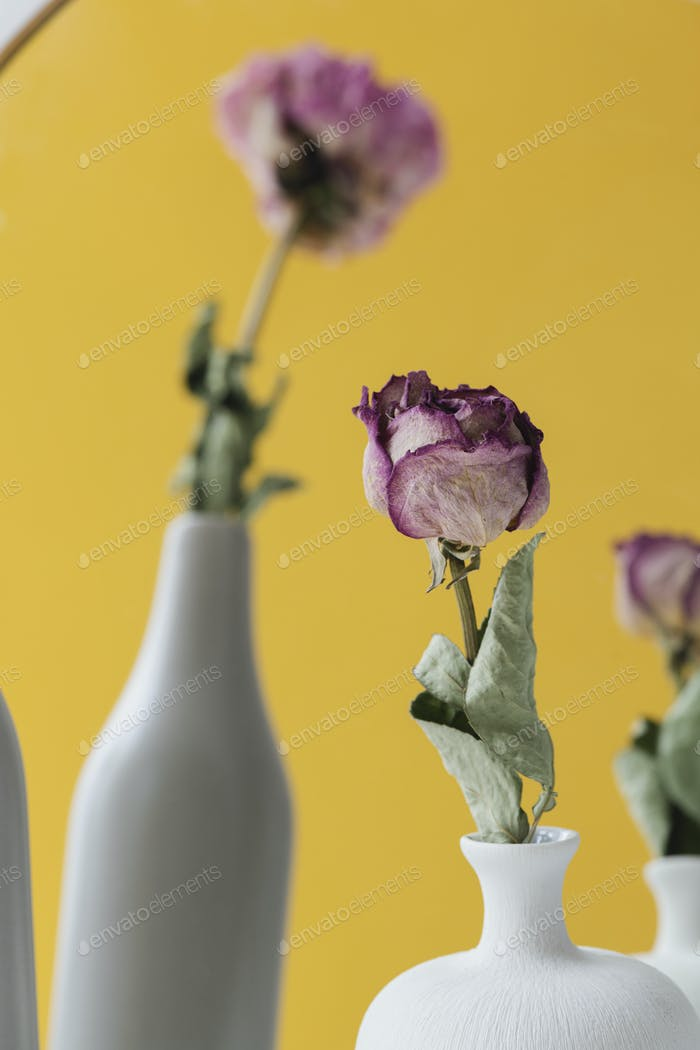Dried pink roses in vases reflecting in a mirror