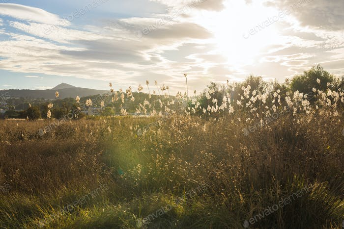Nature and landscape concept - Yellow autumn meadow on the background of mountains