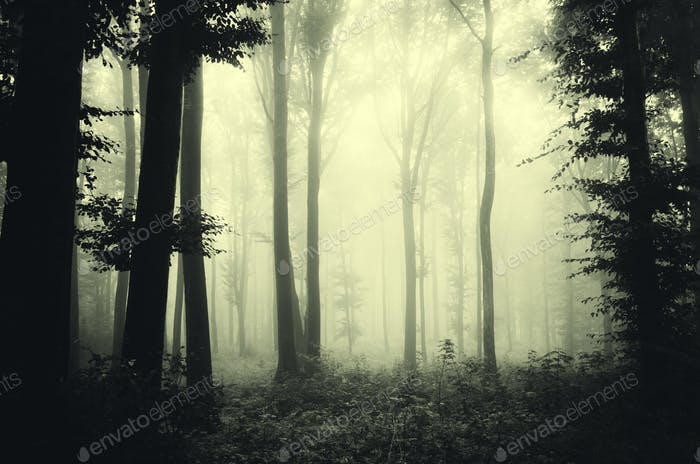 Mysterious dark forest with fog and strange light through trees