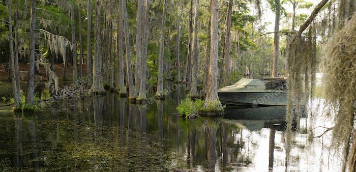Ein Georgia State Sumpfsee hat reichlich Zypressenbäume tief im Süden