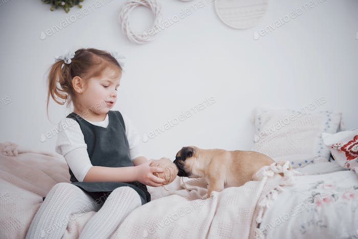 Adorable little girl feeding cute pug. She bought a puppy. the best friend