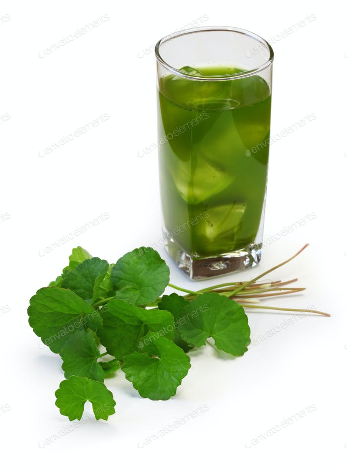 hausgemachter gotu kola (indischer Pennywort) Saft, Thai gesundes Getränk