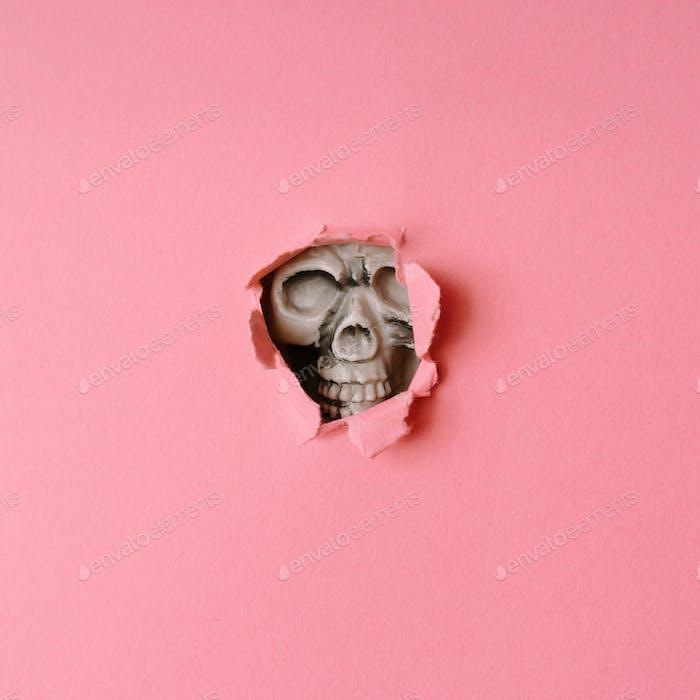 Skull breaking through pastel pink wall. Creative Halloween minimal concept.