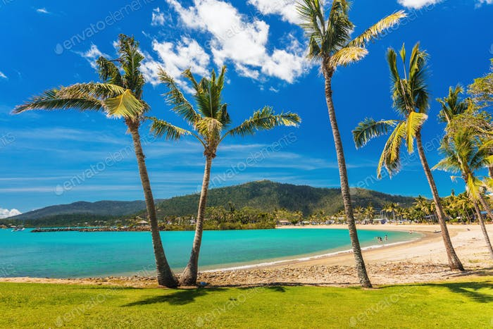 Sandstrand mit Palmen, Airlie Beach, Whitsundays, Queensla