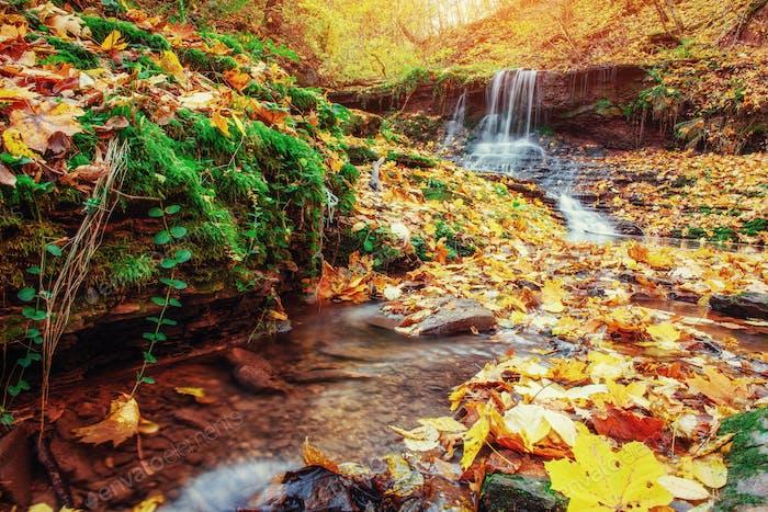 Waterfall in autumn sunlight. Carpathians. Ukraine. Europe
