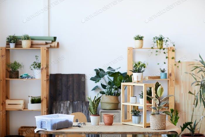 Zimmerpflanzen Hintergrund