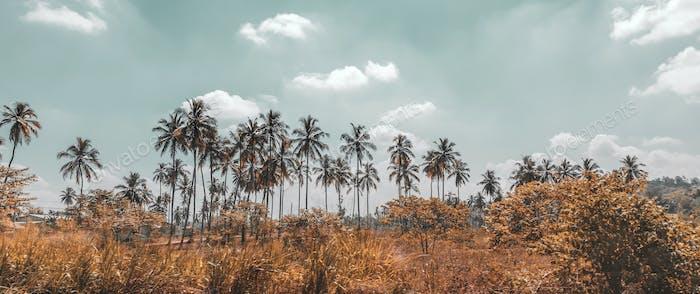 Palm trees plantation