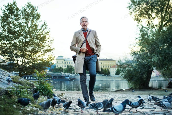 Mature businessman walking by river Vltava in Prague city, through pigeons.