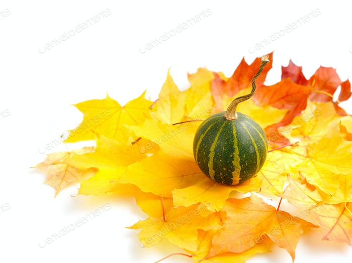 Mini pumpkins on autumn leaves on a white background