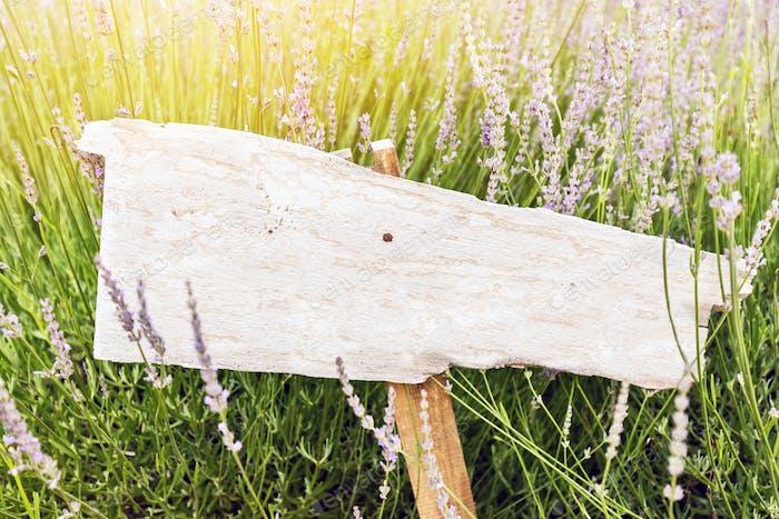Singpost in grass and lavender field. Rustic board
