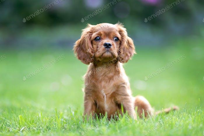 Cute puppy sitting in the garden