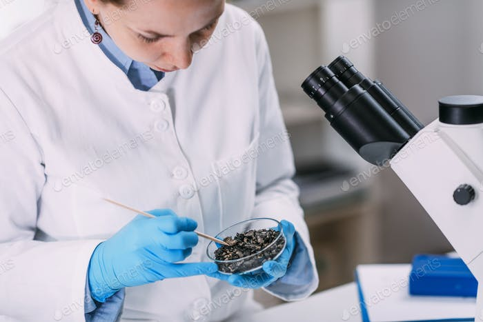 Archeology Scientists Analyzing Charred Wood in Petri Dish