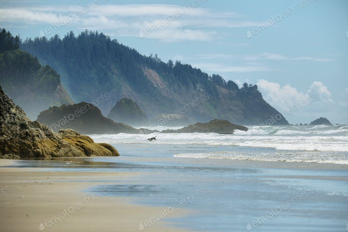 View of wild beach in Oregon