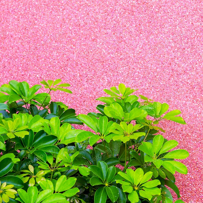 Plants on pink concept. Tropical Green on pink background wall.