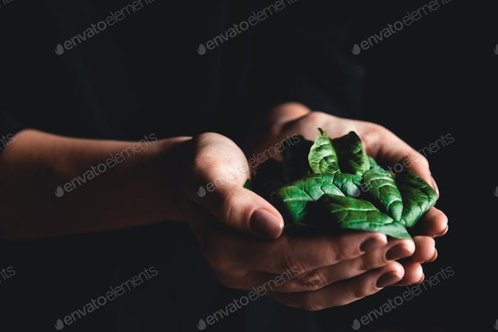 healthy eating, dieting, vegetarian food and people concept close up of woman hands holding spinach