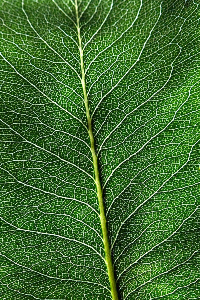 Macro photo dark green natural background with leaf with a pattern of veins. Layout foliage. Flat