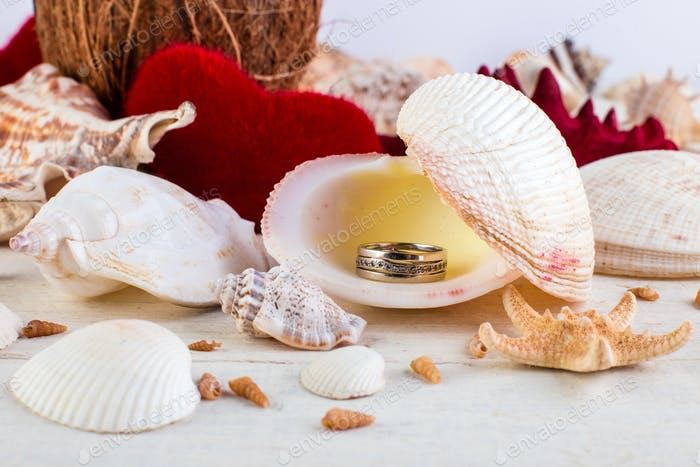 Engaged ring seashell