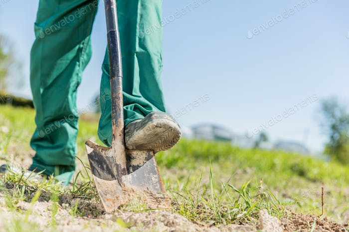 Gardener digging in a garden with a shovel.