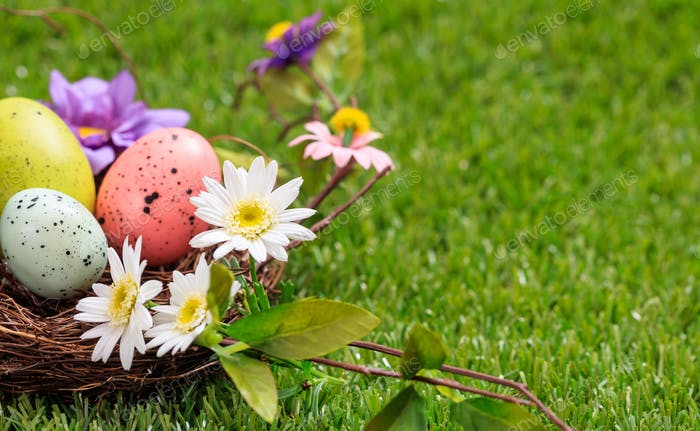 Easter eggs and white daisies on green grass, close up view