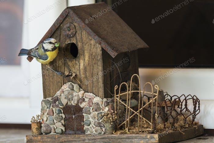 Chickadee bringing food to birdhouse