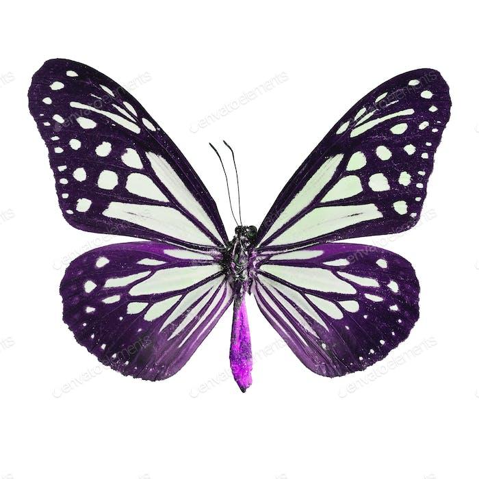 Phantasie Schmetterling isoliert auf weiß
