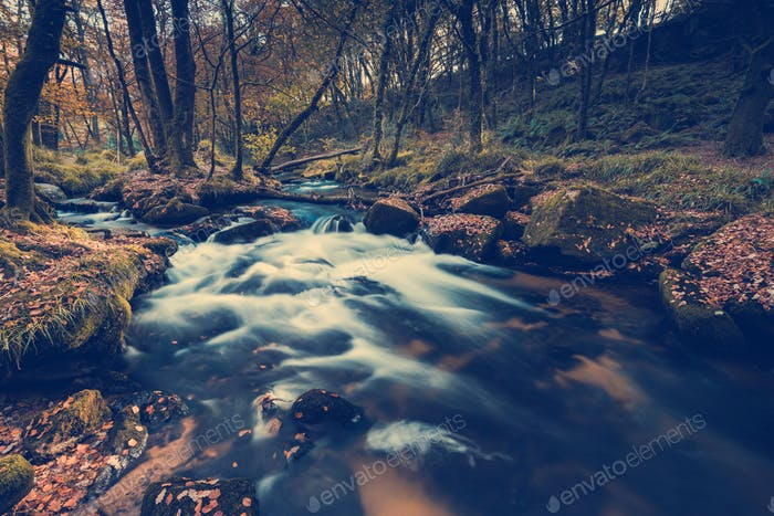 Fast flowing wild creek in forest,toned and colored image