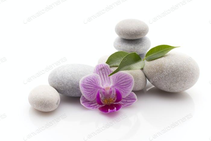 Spa Massagesteine mit Orchidee Studio-Fotografie.
