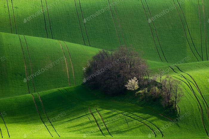 Amazing detail scenery at South Moravian field, Czech republic.
