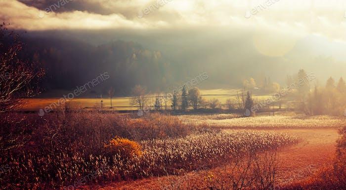 Nebeliger Herbst