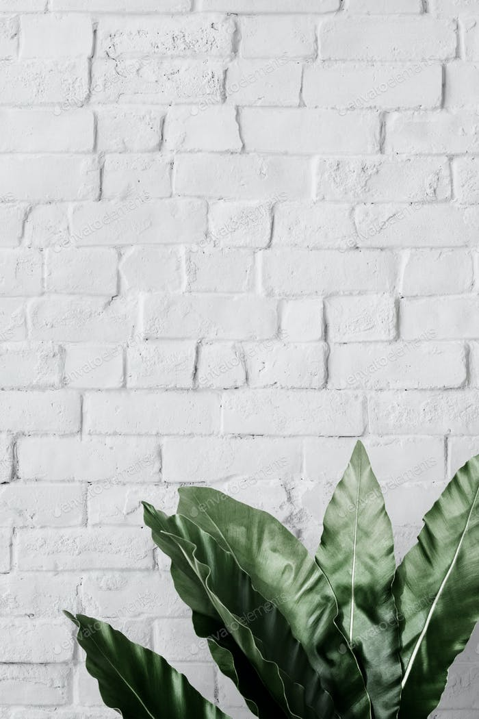 Bird's-nest fern white brick mockup