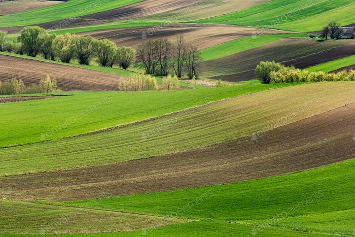Rolling Green Hills. Beautiful Farmland and Coutryside at Spring in Poland