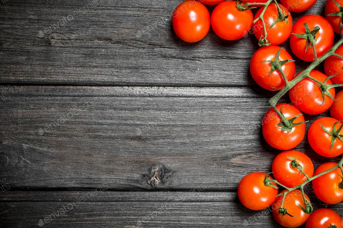 Red tomatoes on a branch.