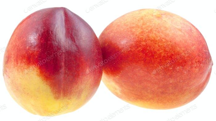 two fresh Nectarines